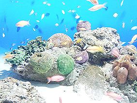 南の海20150925