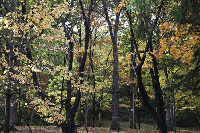 151014神楽岡公園03