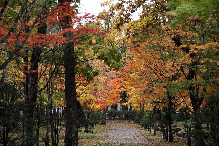 151014神楽岡公園04