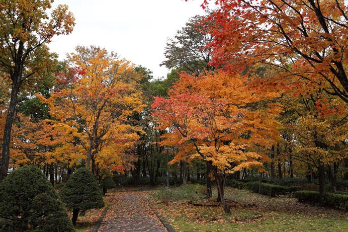151014神楽岡公園05