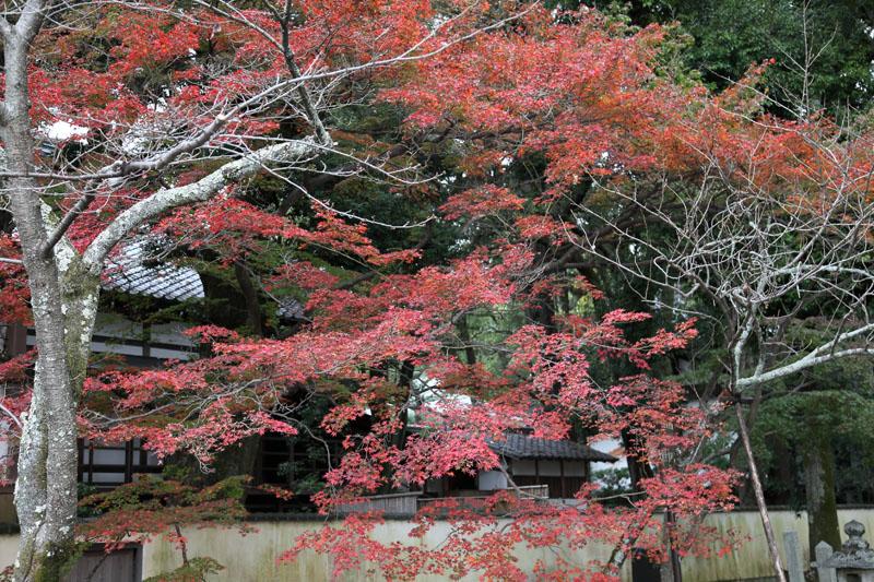 151128京都08