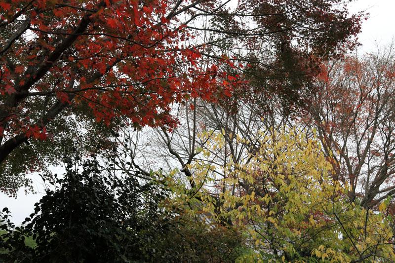 151130京都旅行05