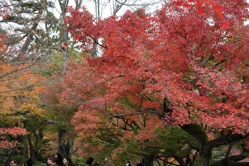 151201京都旅行02