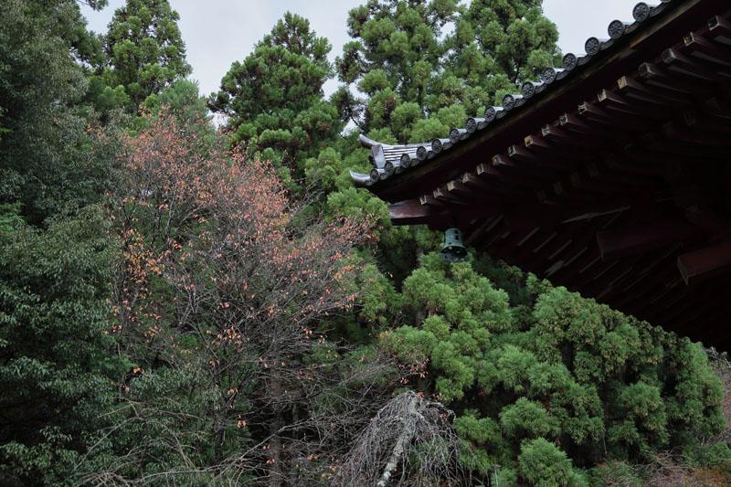 151207京都旅行06