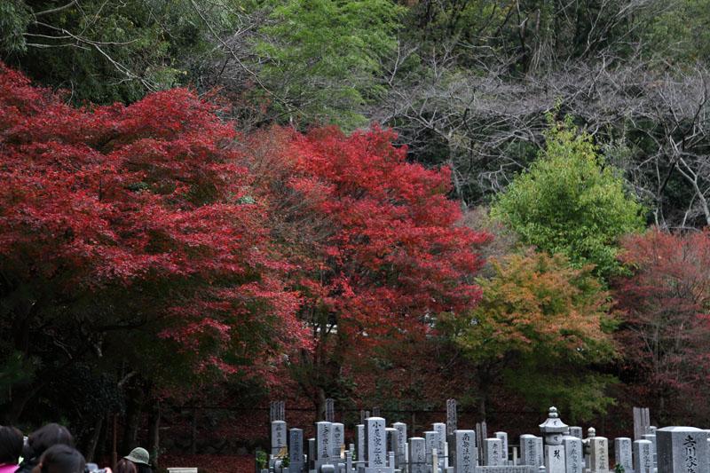 151202京都旅行03