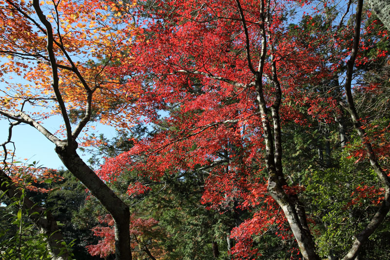 151202京都旅行04