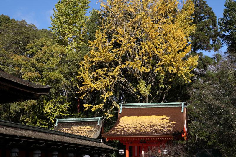 151202京都旅行06