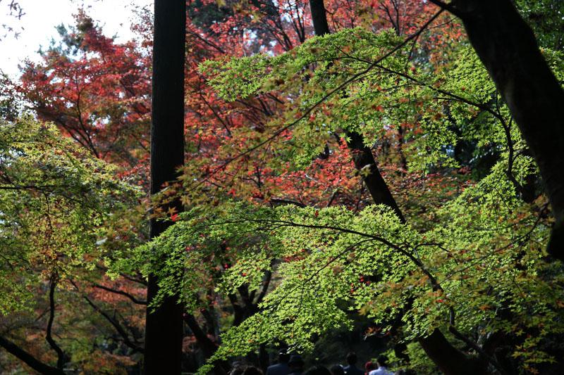 151202京都旅行09