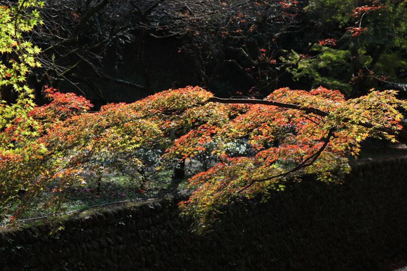 151202京都旅行10