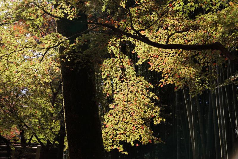 151202京都旅行11
