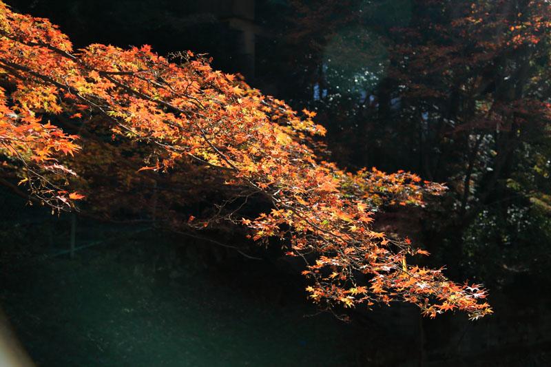 151202京都旅行12