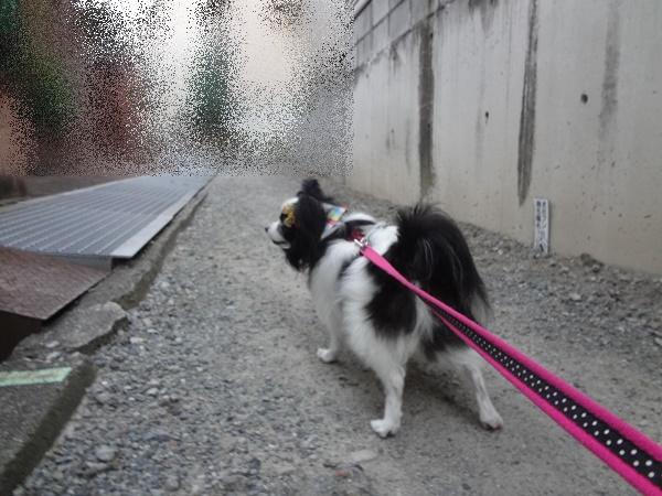 お散歩中2