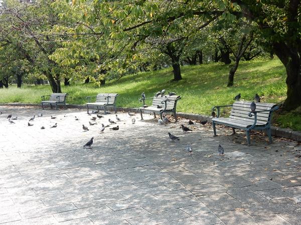 ベンチに鳩