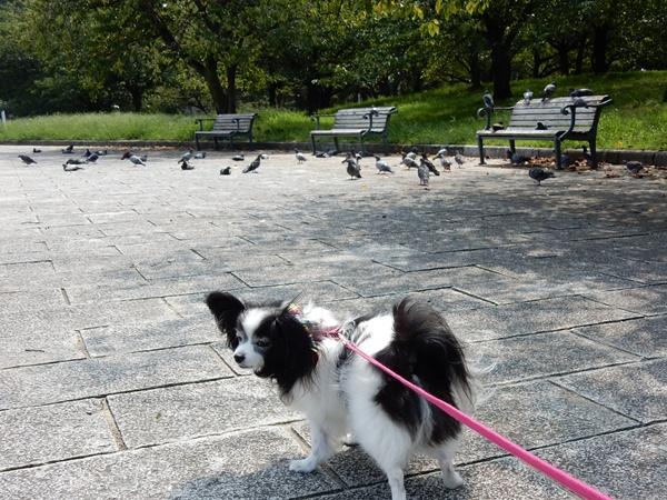 公園についたよ