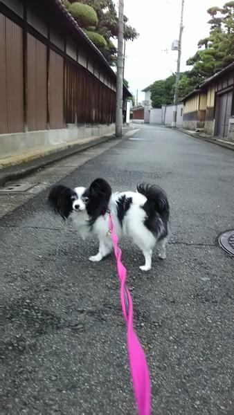 お散歩中1