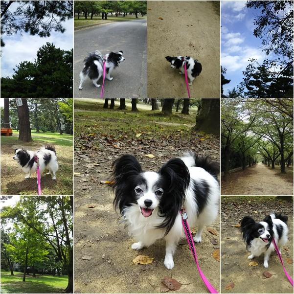 公園散歩1