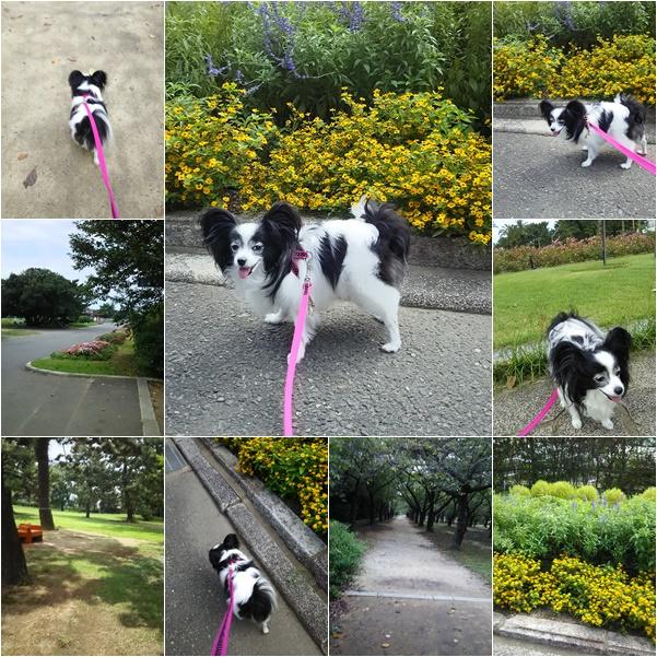 公園散歩2