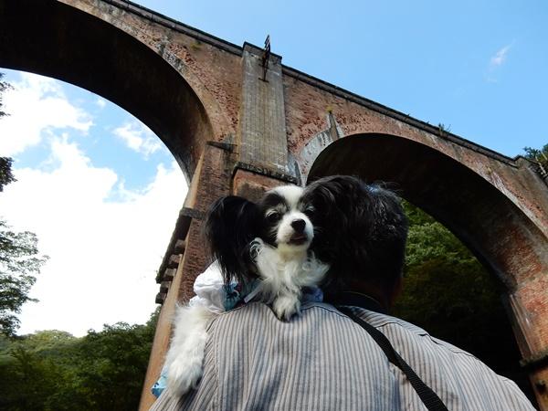 眼鏡橋とルビー1