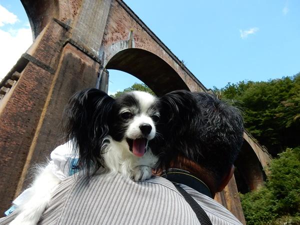 眼鏡橋とルビー2