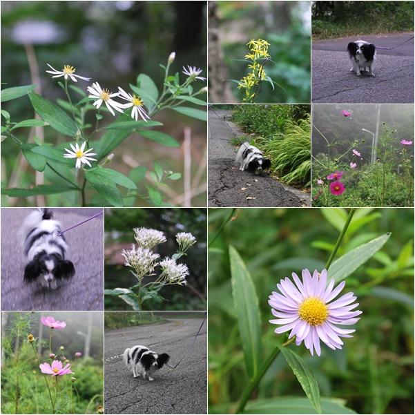 野の花とお散歩ルビー