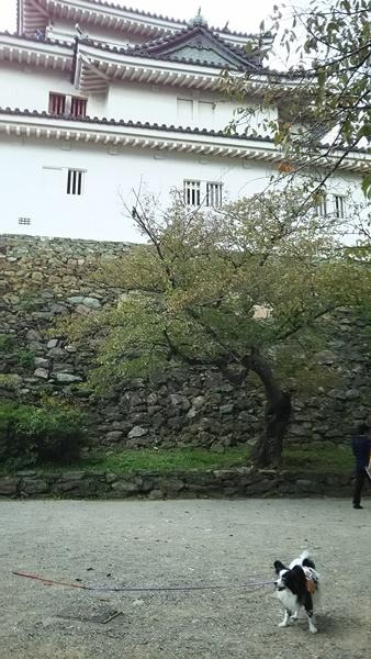 和歌山城と1