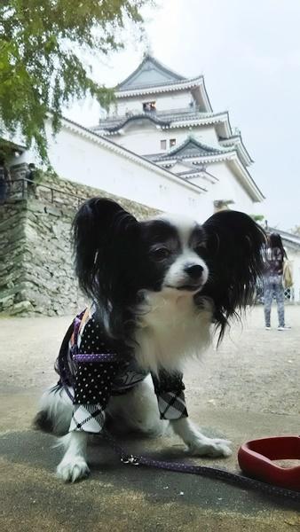 和歌山城をバックに