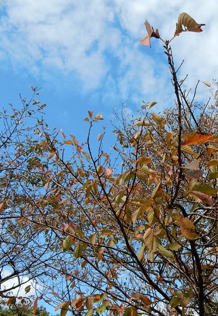 青空と桜の木