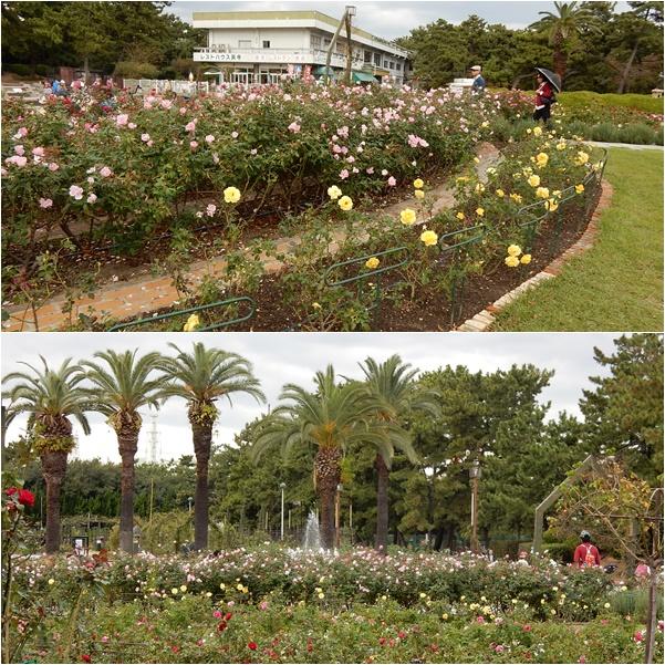 薔薇の花壇