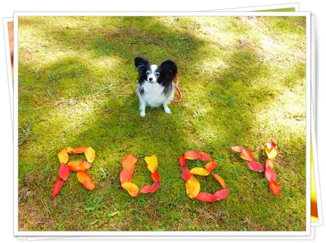 葉っぱ文字「RUBY」1
