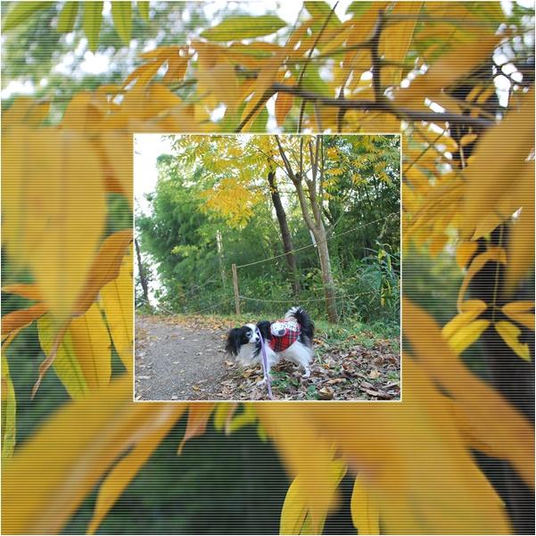 黄色い葉っぱと