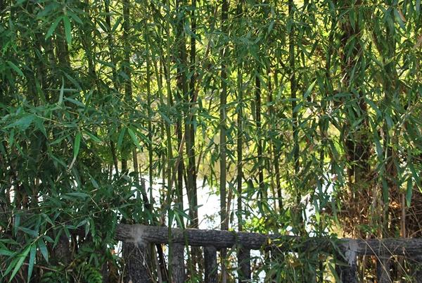 池の周りの竹やぶ