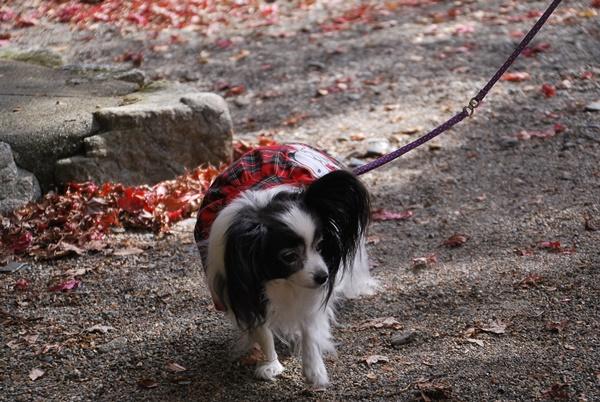 紅葉の落ち葉とルビー