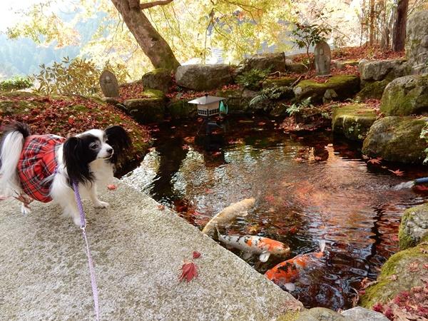 鯉の池でポーズ