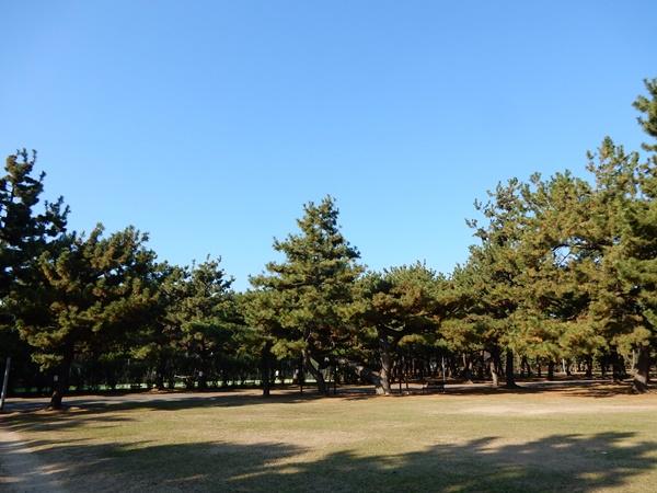 青空と松林