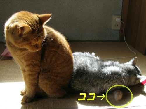 booako_201510121215.jpg