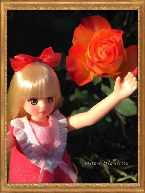 Rose IMG_5540_Fotor