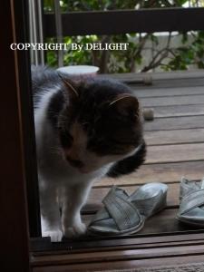 とっちゃん猫
