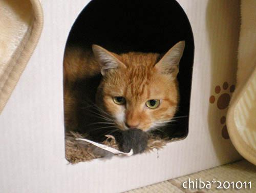 chiba10-11-40.jpg
