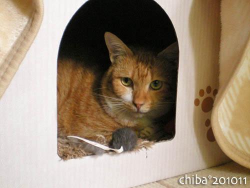 chiba10-11-42.jpg