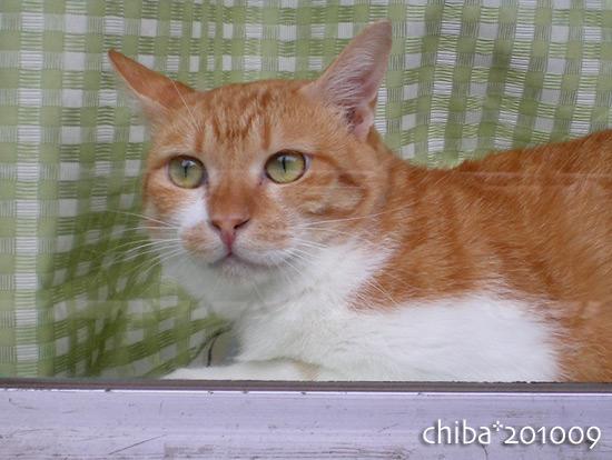 chiba15-10-53.jpg