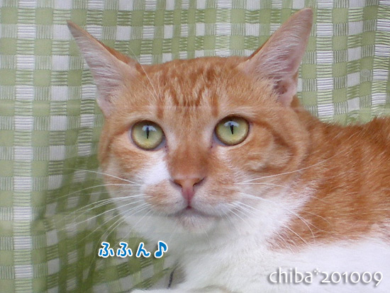 chiba15-10-54.jpg