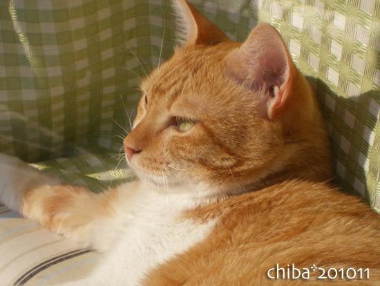 chiba15-11-03.jpg