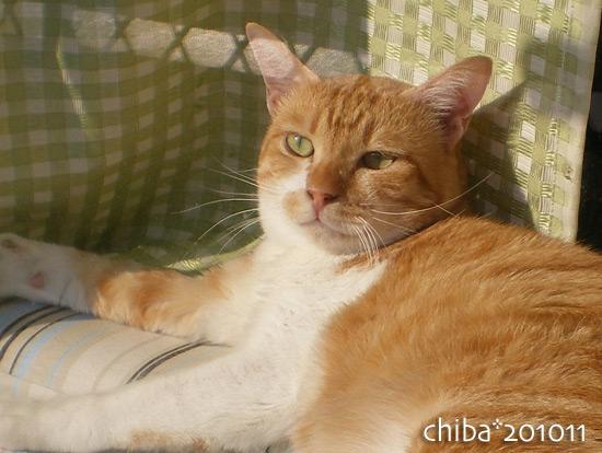 chiba15-11-04.jpg