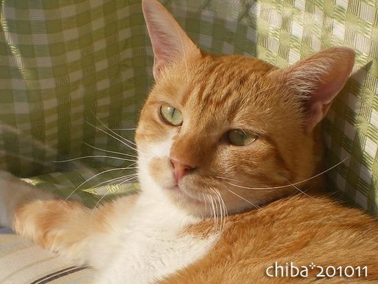 chiba15-11-05.jpg