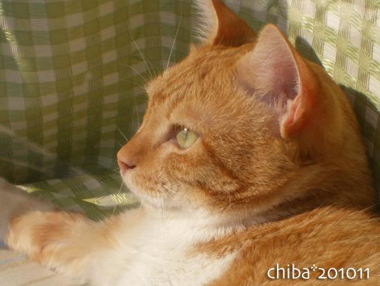 chiba15-11-06.jpg