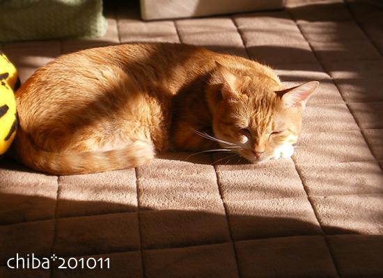 chiba15-11-07.jpg