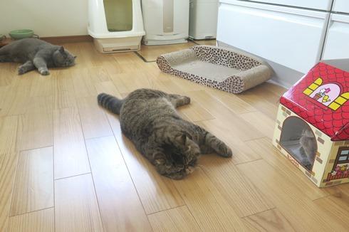 1)ぷくさんお昼寝用