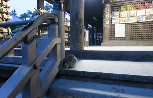 14)智恩寺のネコ