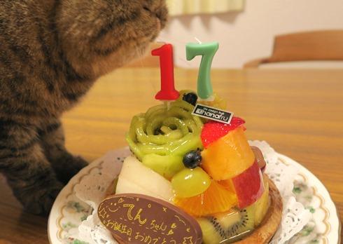 12)てんちゃんのケーキ