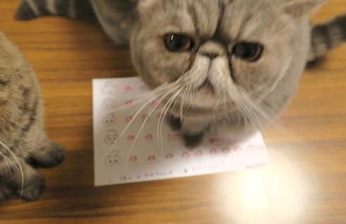 13)ぷくが1位でちよ!